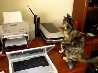 Кот и принтер