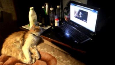 Кот Виталик смотрит на себя в интернетах