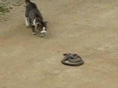 Кот VS Змея (смотреть до конца)