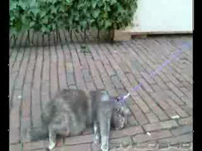 Самые ленивые коты