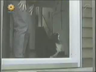 Gato Estúpido