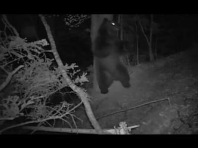 Что происходит ночью в лесу