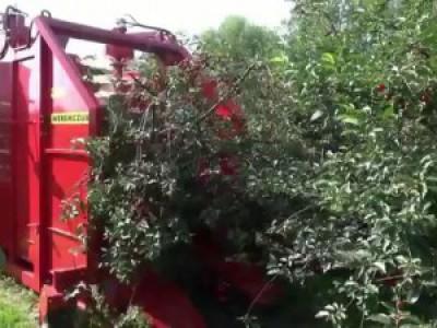 Современная техника для сбора вишни
