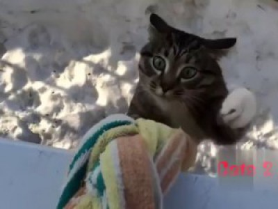 Кошки | Видео приколы | FUNNY CATS | Cats 2 Cats#65 Restaurant