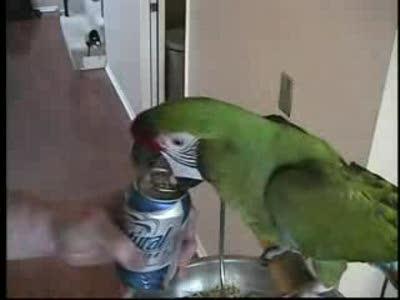 попугай открывашка
