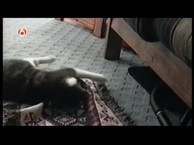Как щенок украл коврик у кота
