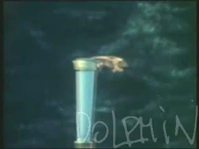 Дельфин - Весна (Dolphin - Spring)