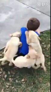 куча-мала