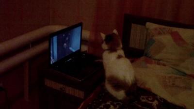Кот кино смотрит
