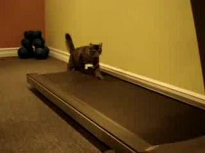 Коты на беговой дорожке