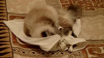 Все кошки делают это