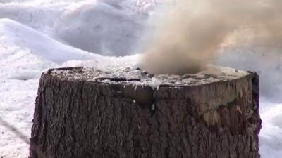 Вулкан из старого пня и калиевой селитры #2