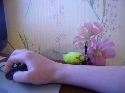 попугай и флешка