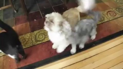 собака не умеет лаять