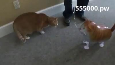 Кот взорвал надувного кота