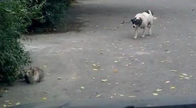 Собака-партизан