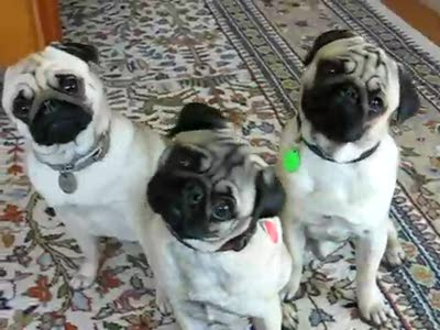 Три щенка - синхронисты