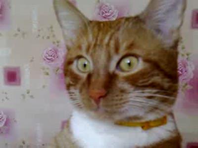 Кот как плюшевый мишка