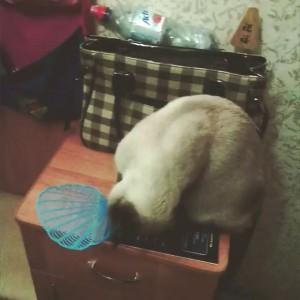 Кот-мухобой
