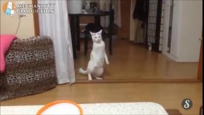 кот и хер пойми какаямузыка