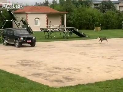 Собакен-подрывник