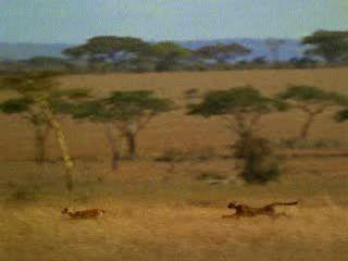 Спасение антилопы