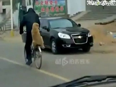 Щенок на велосипеде