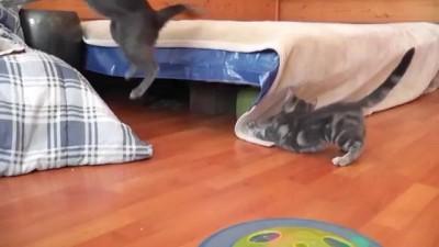 Котенок напугал маму