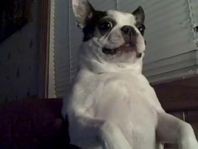 Собака и щекотка