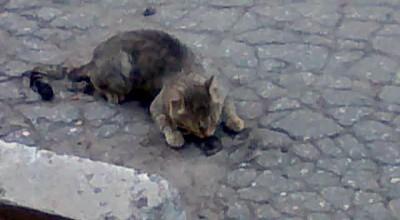Коте и валерьянка