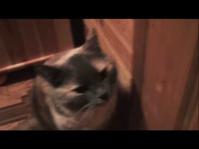 Свойство кошки - горящие глаза