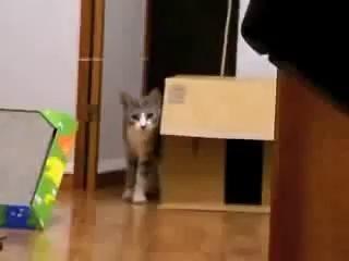 Кот призрак