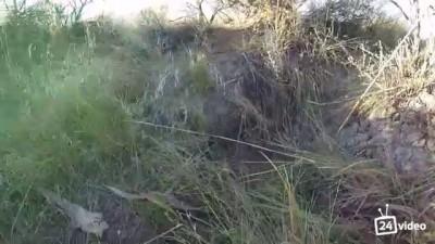 Экшн-камера угодила в яму со змеями