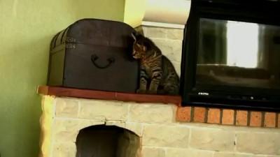 Кошка-леопард