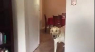 Фобии собак