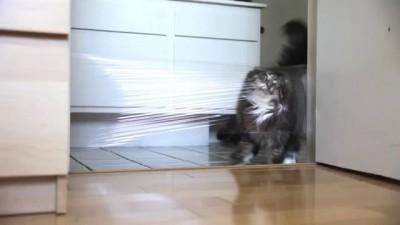 Троллинг кота