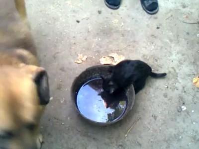 Cat & Dog Friendship Forever / Кот И Пёс Дружба навсегда