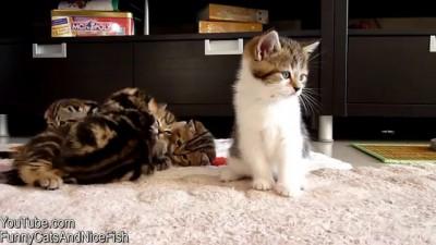 Икающий котёнок