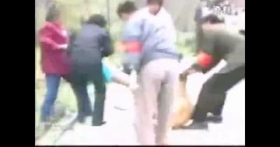 Львица напала на девочку прохожие пытаются спасти ребенка ...
