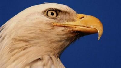 The Eagles - Hotel California-True HD Audio-320 KBPS