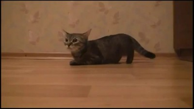 Кот стритрейсер