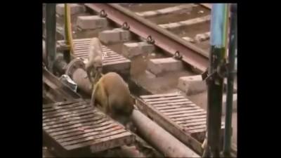 спасла друга