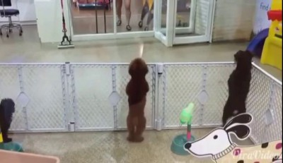Dancing_dog