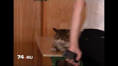 Даешь котиков в Госдуму