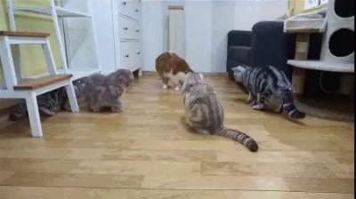 Купили игрушку... Котов не слышно третий день! ))