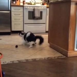 Кошачий танец