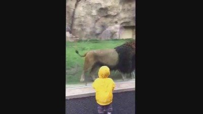 Лев набросился на малыша в японском зоопарке/A child is attacked by a lion at Chiba Zoological Park