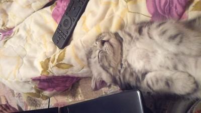 Кот засыпает