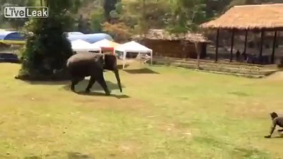 Слон охранник
