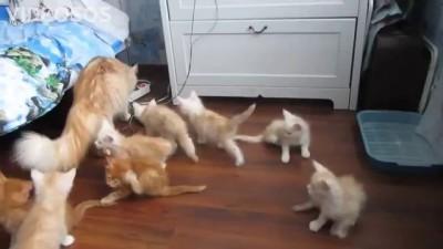 Кошка до смерти испугала своих котят!!!